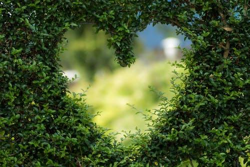Lebensbaum von Heckenpflanzen Heijnen